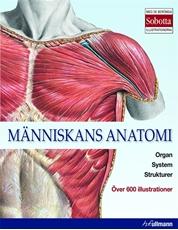 Bild på Människans anatomi